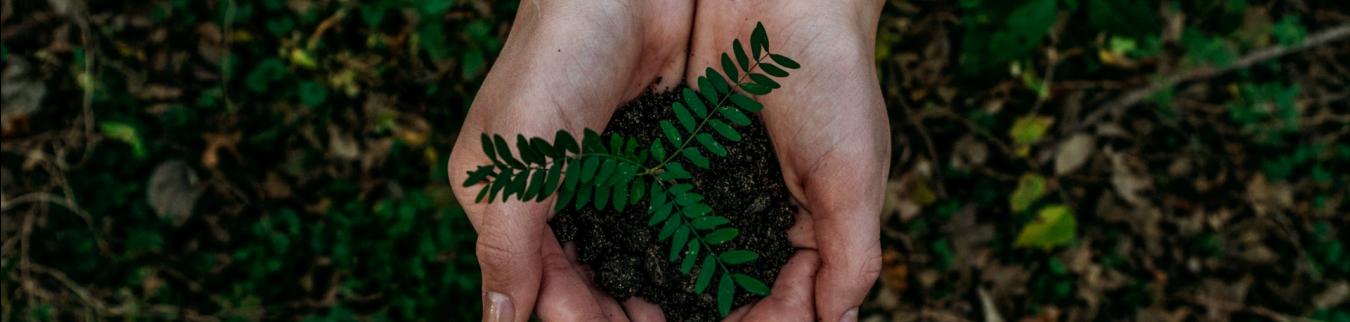 Sustainability - Photo 1